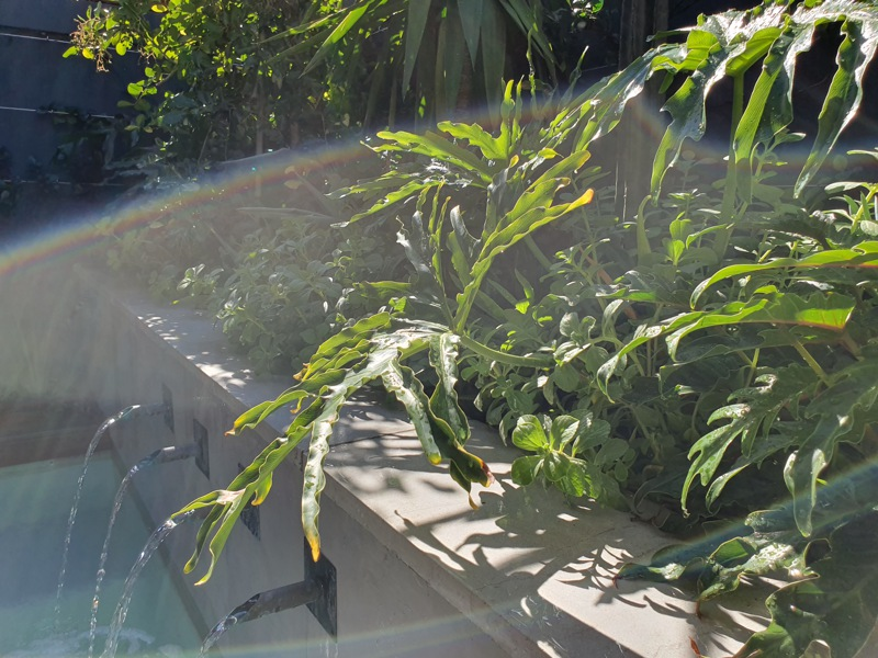 92 Waterkant Street - pool and plants