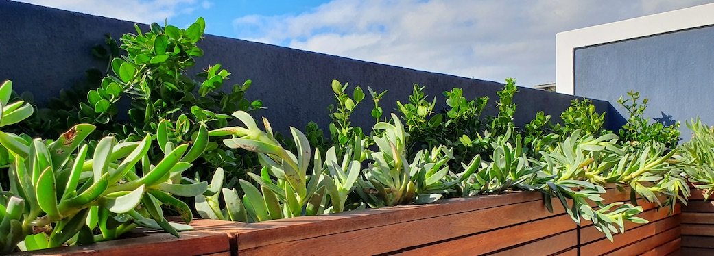 92 Waterkant Street - roof balcony plants